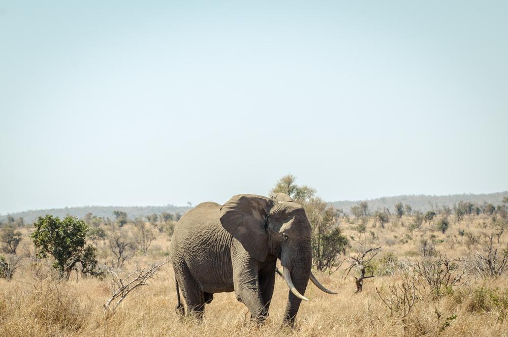 20140825_christoph_schlein_südafrika_wildlife_blog (21 von 43).jpg