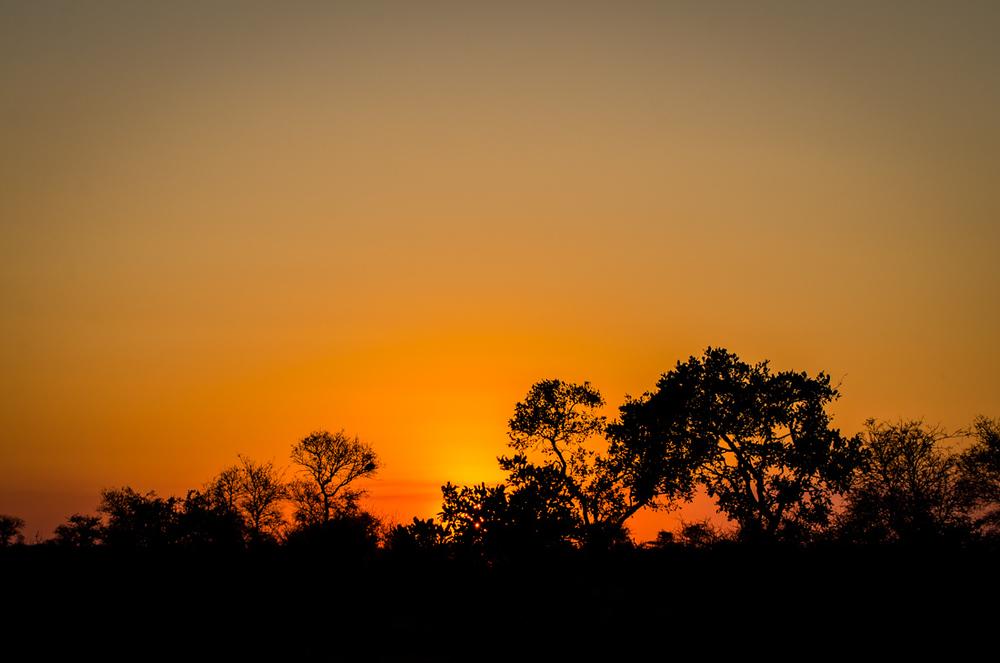 20140825_christoph_schlein_südafrika_wildlife_blog (23 von 43).jpg