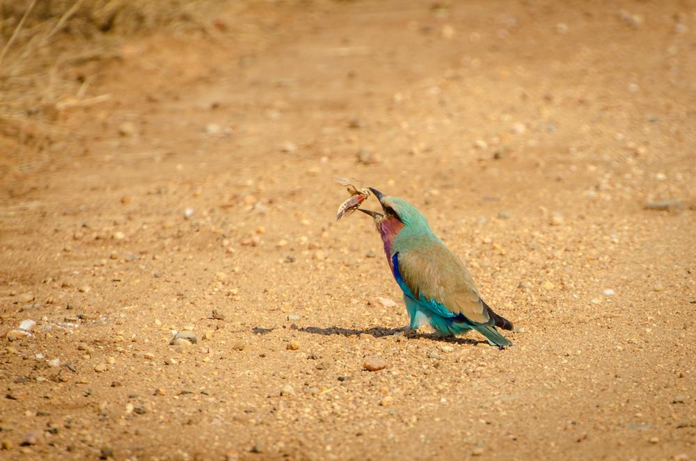 20140825_christoph_schlein_südafrika_wildlife_blog (24 von 43).jpg