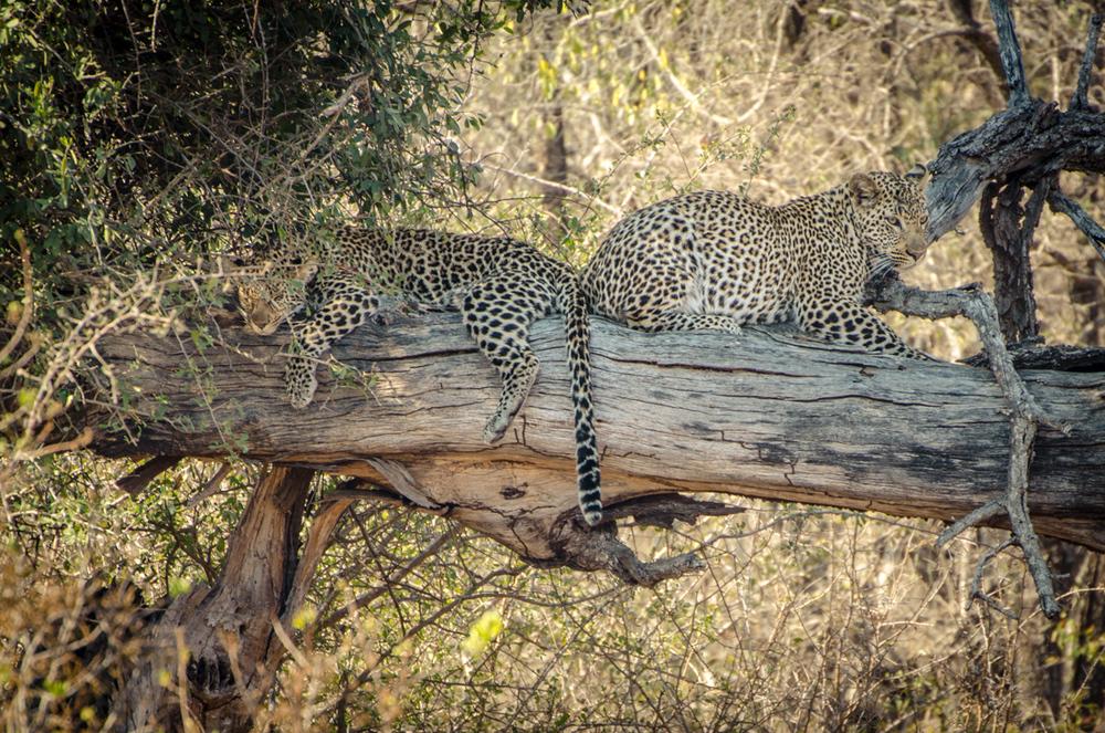 20140825_christoph_schlein_südafrika_wildlife_blog (25 von 43).jpg