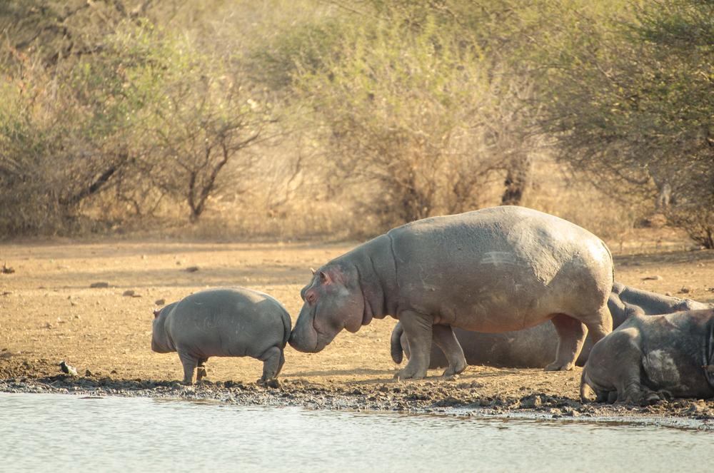 20140825_christoph_schlein_südafrika_wildlife_blog (26 von 43).jpg