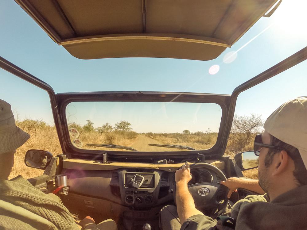 20140825_christoph_schlein_südafrika_wildlife_blog (30 von 43).jpg
