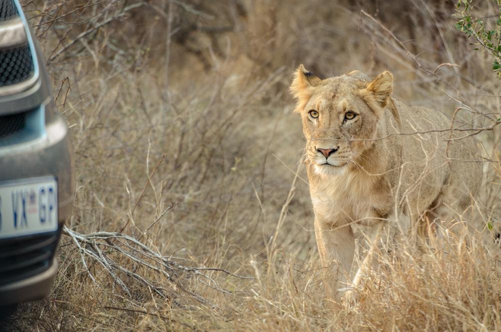 20140825_christoph_schlein_südafrika_wildlife_blog (31 von 43).jpg