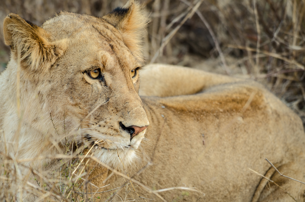 20140825_christoph_schlein_südafrika_wildlife_blog (33 von 43).jpg