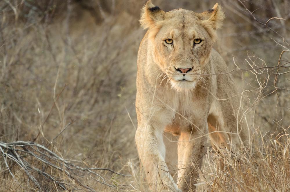 20140825_christoph_schlein_südafrika_wildlife_blog (32 von 43).jpg