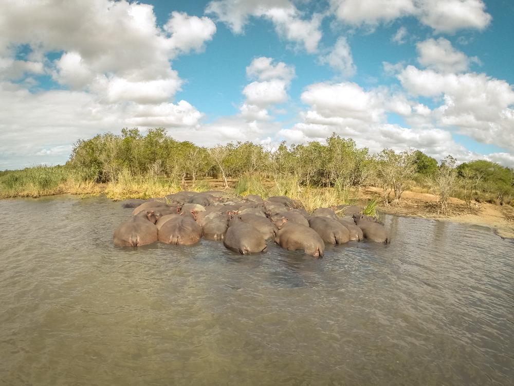 20140825_christoph_schlein_südafrika_wildlife_blog (39 von 43).jpg