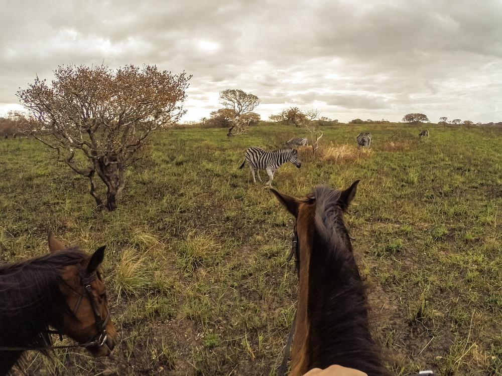 20140825_christoph_schlein_südafrika_wildlife_blog (40 von 43).jpg