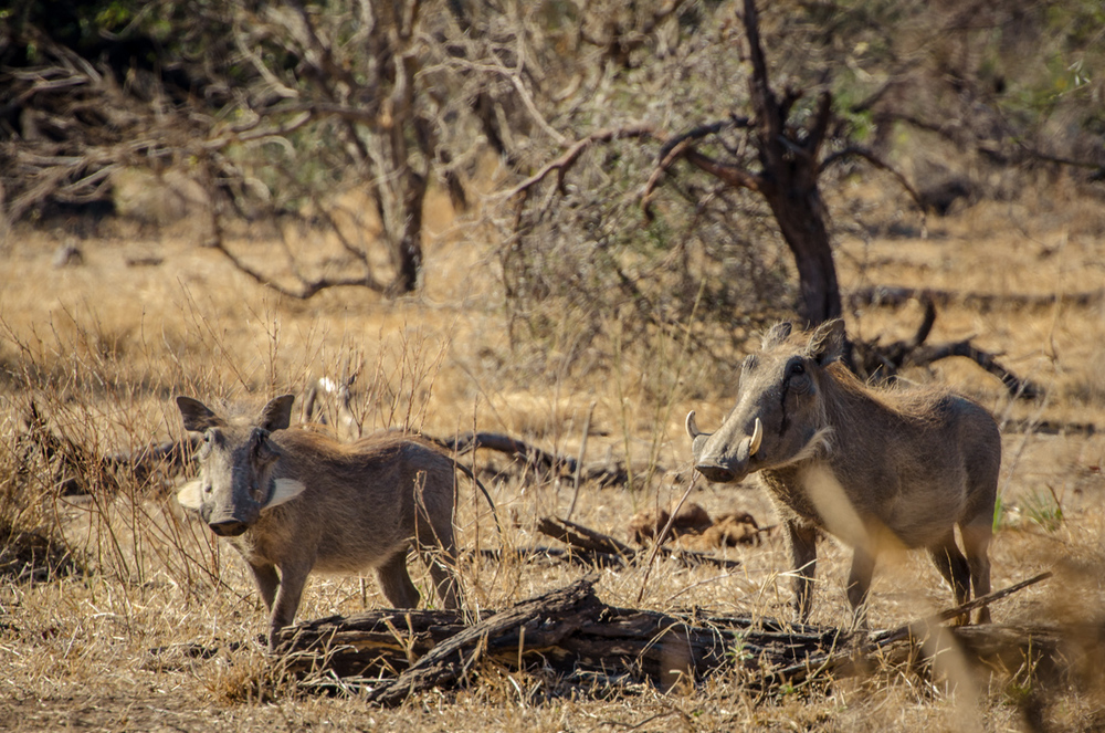 20140825_christoph_schlein_südafrika_wildlife_blog (4 von 7).jpg