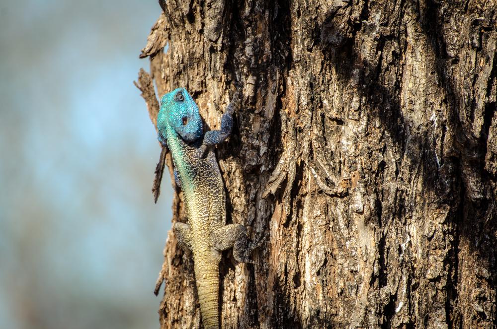20140825_christoph_schlein_südafrika_wildlife_blog (6 von 7).jpg