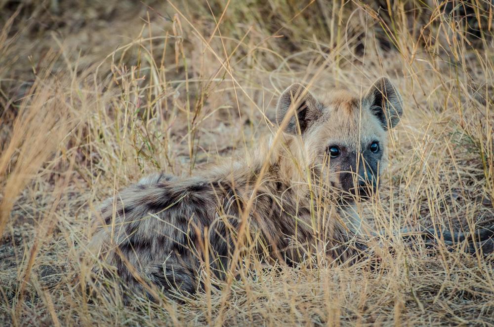 20140825_christoph_schlein_südafrika_wildlife_blog (8 von 7).jpg