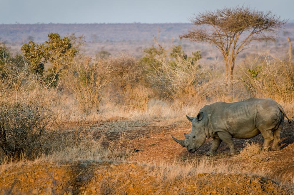 20140825_christoph_schlein_südafrika_wildlife_blog (9 von 7).jpg