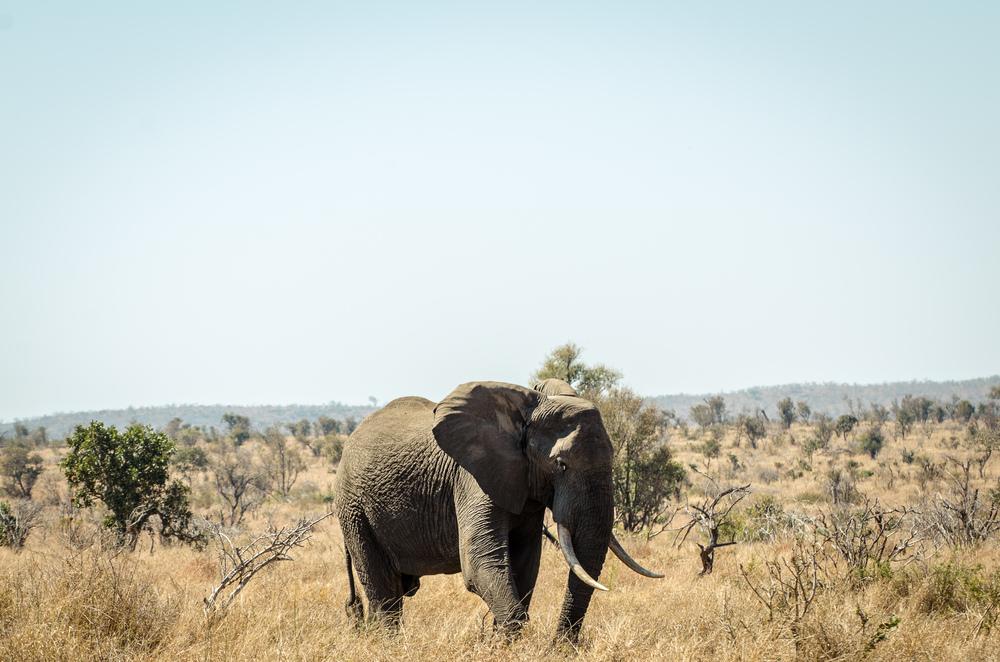 20140827_outdoor_landschaft_südafrika_christoph_schlein-4776.jpg