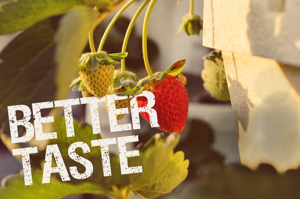 better-taste.jpg