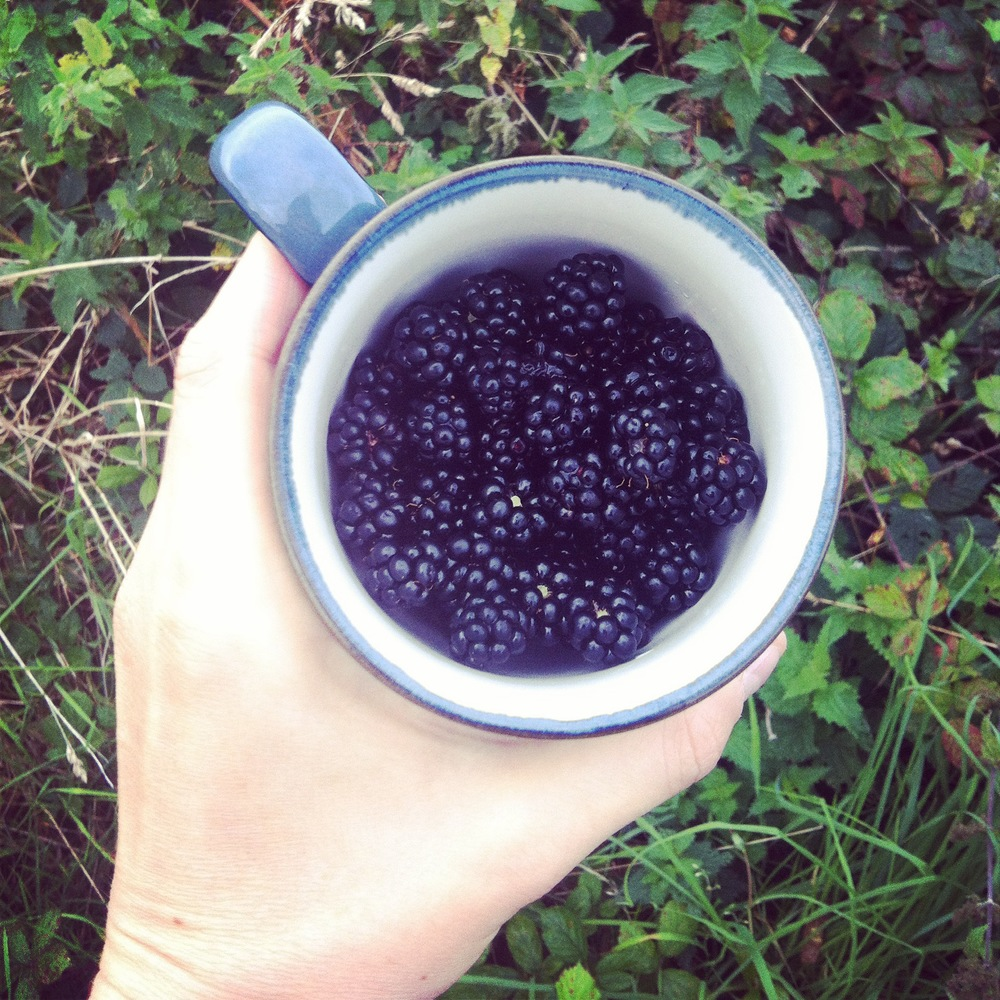Foraged wild blackberries
