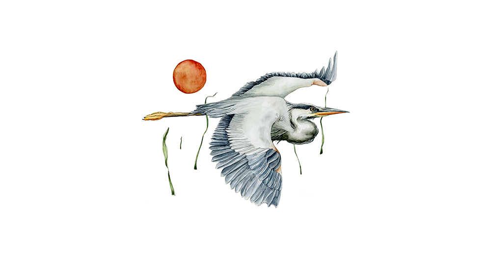 Blue Heron by Hallie Rose Taylor (purchase print on Etsy)