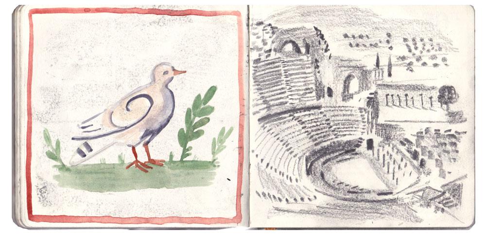 sketch_pigeon.jpg