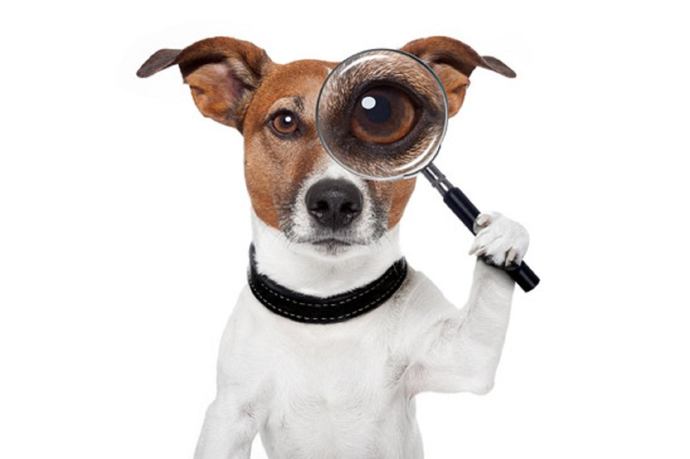 searching dog with magnifying glass searching dog with magnifying glass