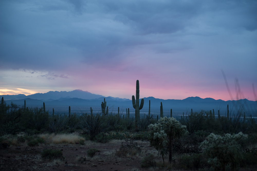 saguaro-sunset-6.jpg