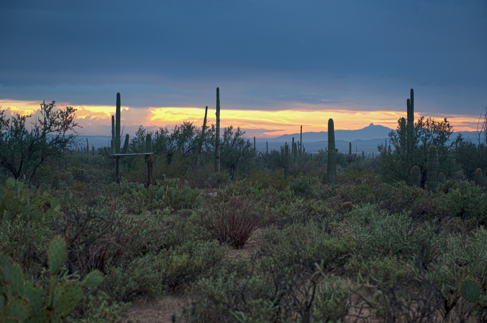 saguaro-sunset-2.jpg