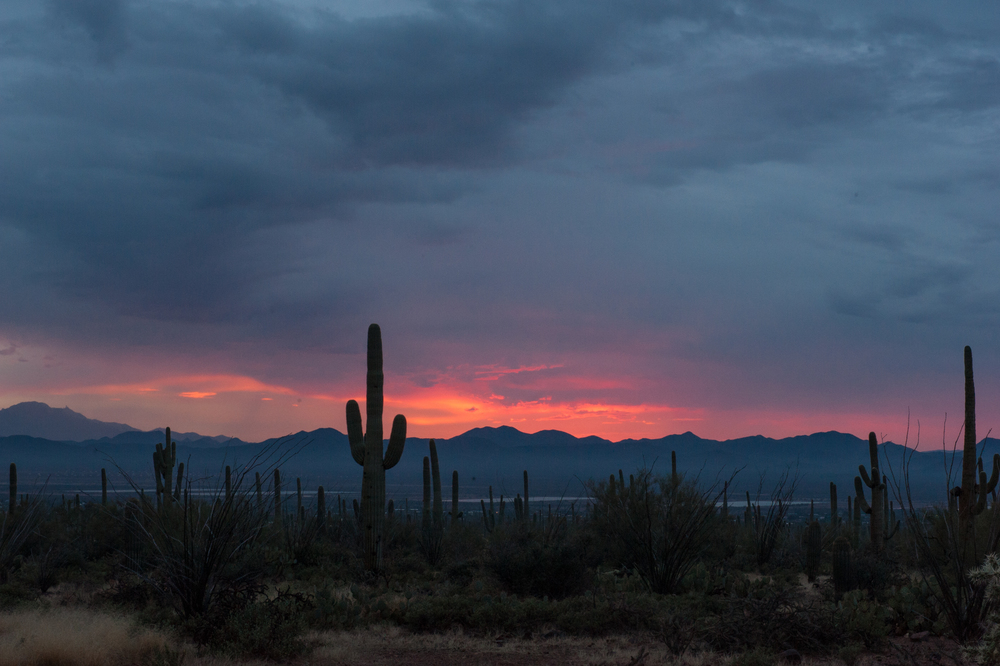 saguaro-sunset-8.jpg