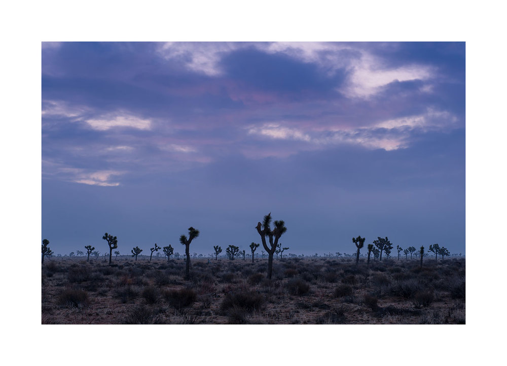 joshua-tree-sunrise2.jpg