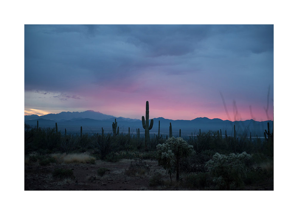 saguaro-sunset.jpg
