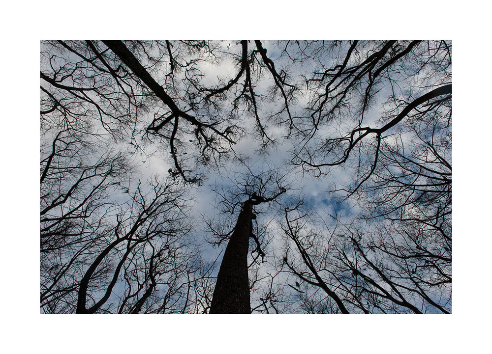 congaree-trees-up-1.jpg