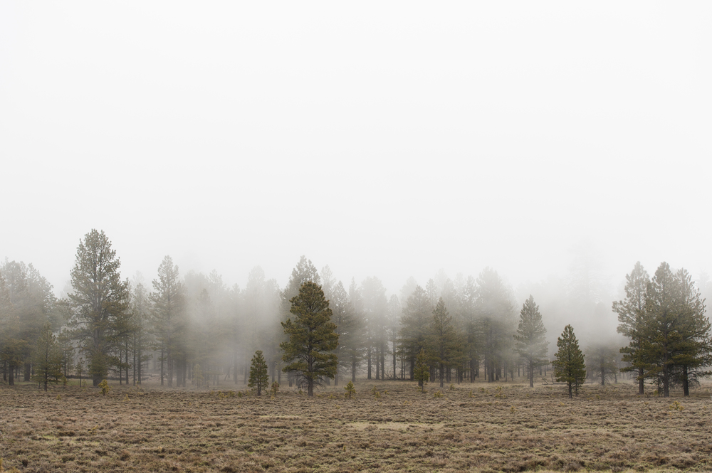 trees in fog-1.jpg