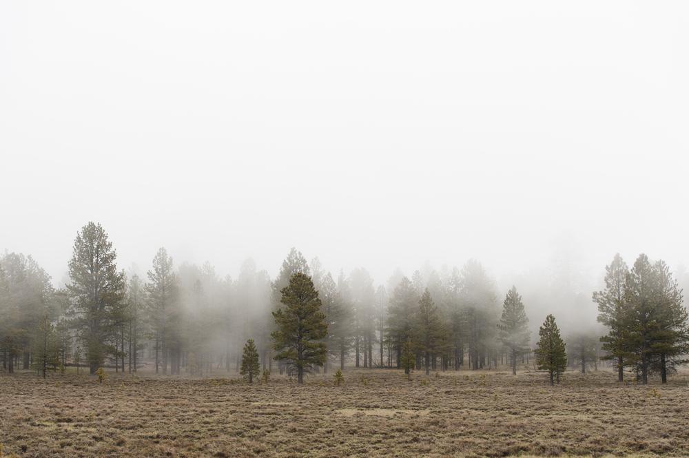 trees in fog-1.jpg