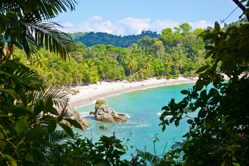trisa-taro-manuel-antonio-national-park-costa rica.jpg