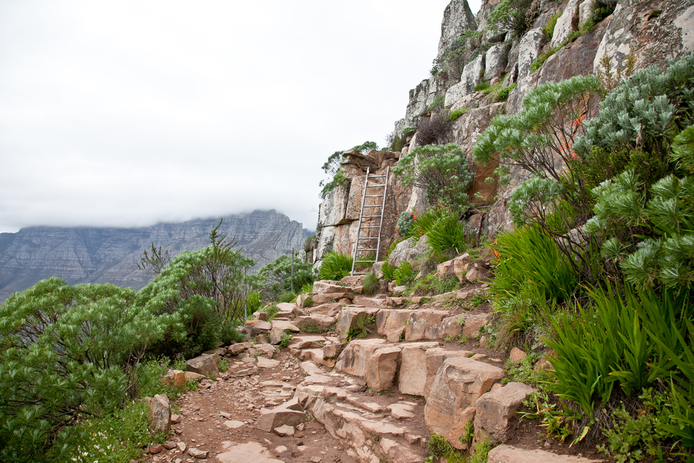 IMG_5041-hiking-lions-head-cape-town-trisa-taro.jpg
