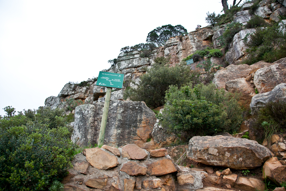 IMG_5045-hiking-lions-head-cape-town-trisa-taro.jpg