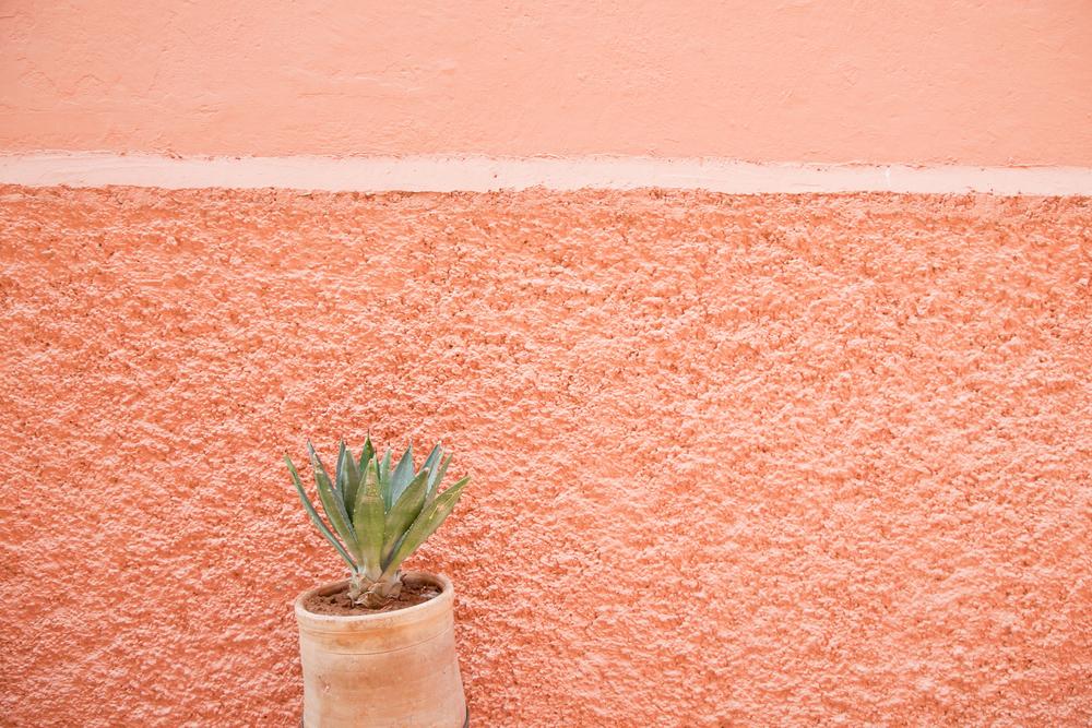 trisa-taro-marrakech-morocco-IMG_2759.jpg