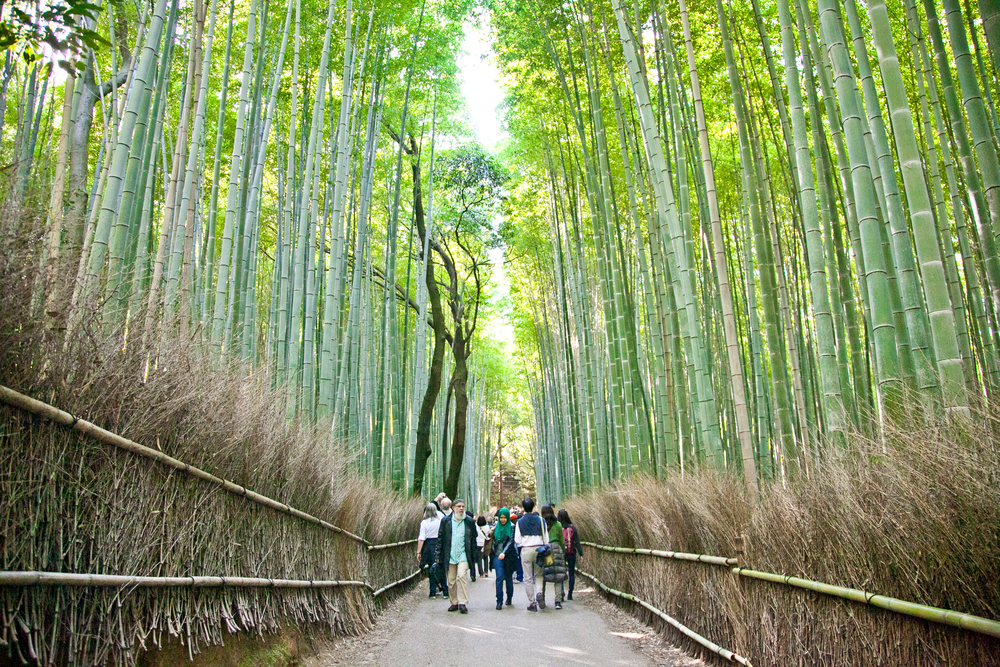 IMG_7012-kyoto-japan-trisa-taro.jpg