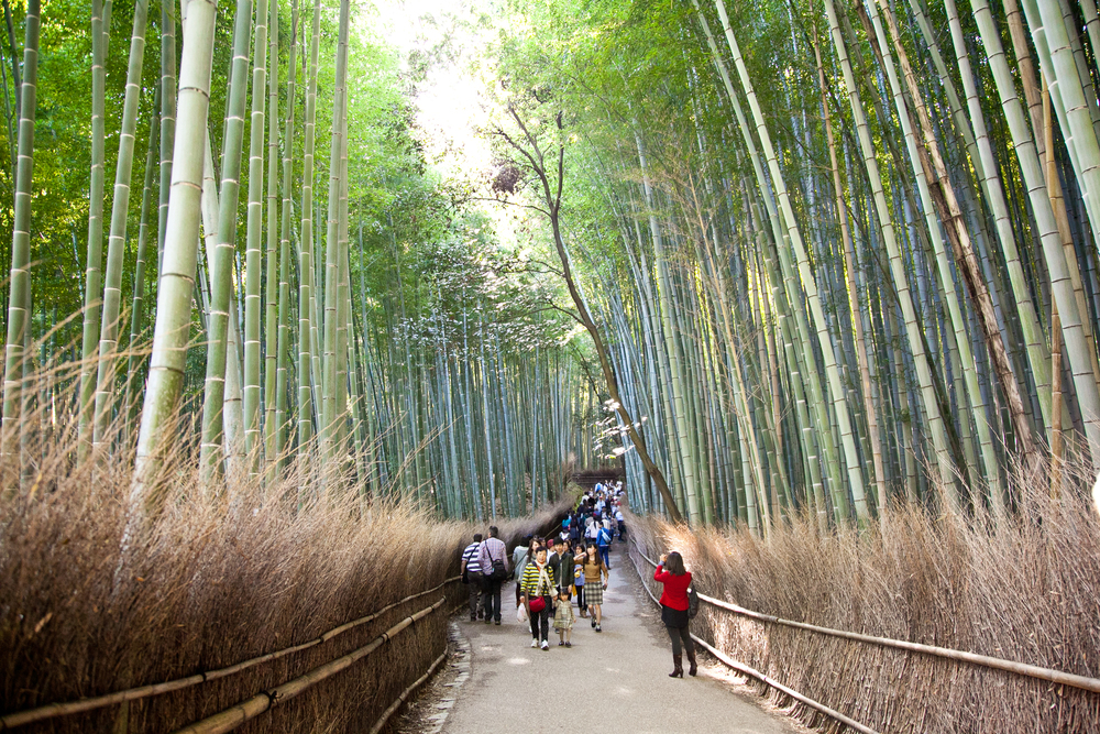 Walking through the Arashiyama Bamboo Grove