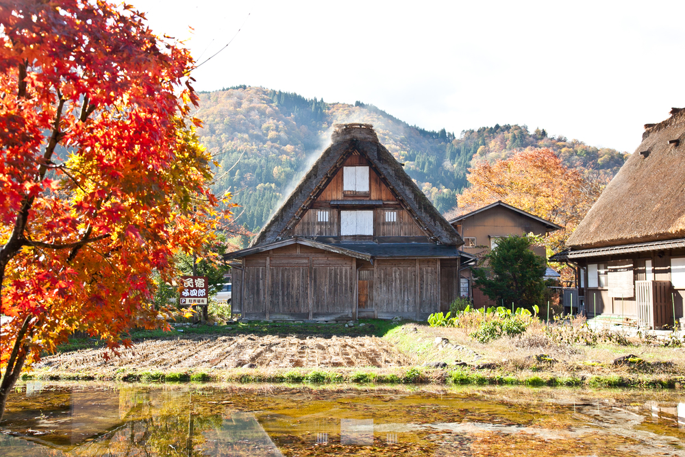 The gassho-style houses all have a signature steep thatched roof, some as old as 250 years!
