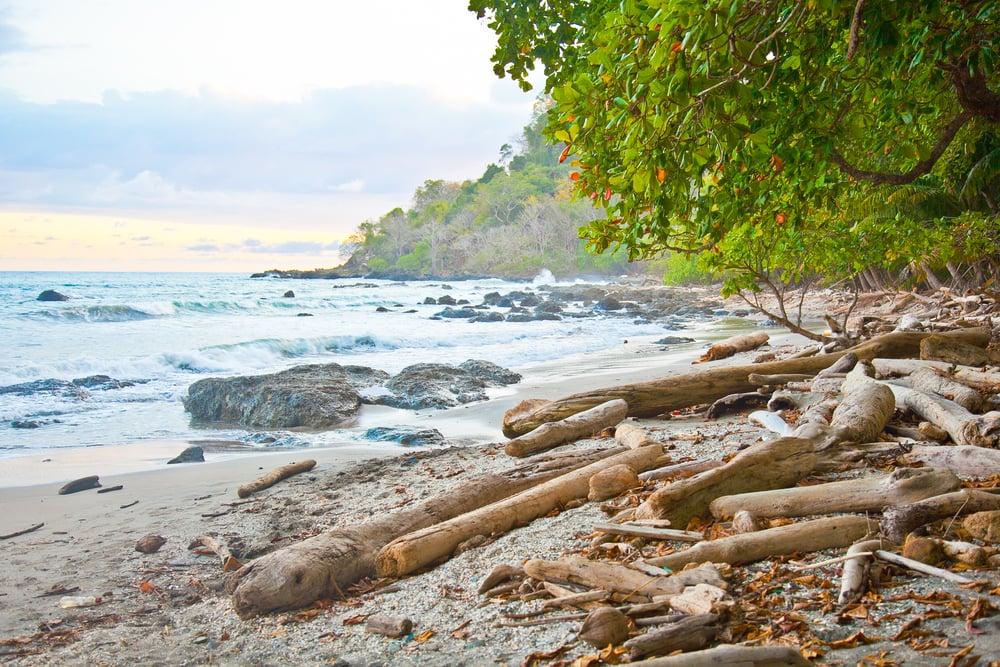 trisa-taro-playa-montezuma-costa rica.jpg