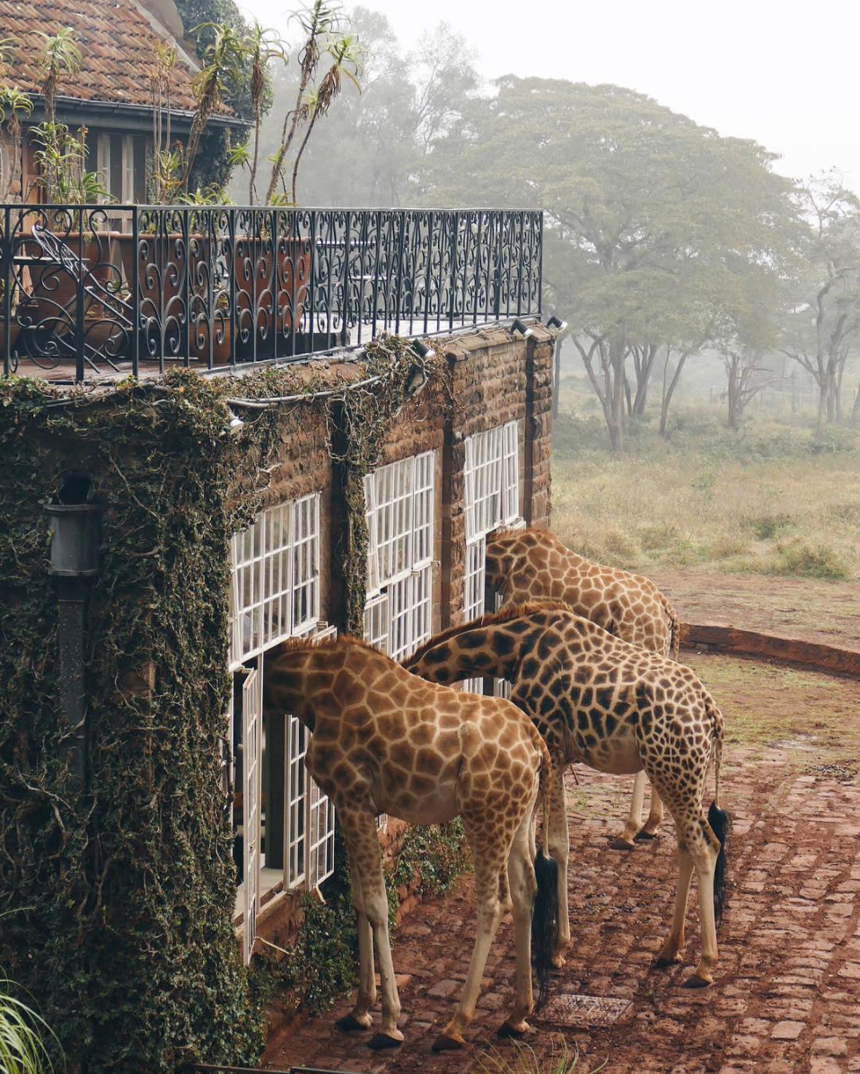 Giraffe Manor   via Earth Focus