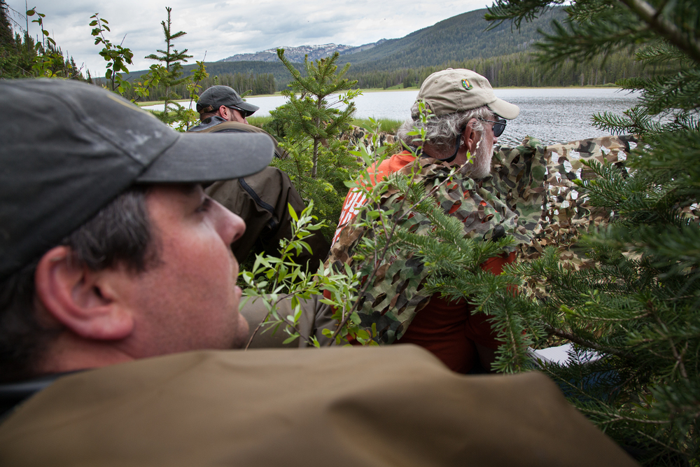 Vincent Spagnuolo (left), Chris Persico (Middle), and Scott Mcmillion (right) hide behind camouflage while waiting for a loon to approach a decoy that is located above the capture net.  Image ©Connor Stefanison