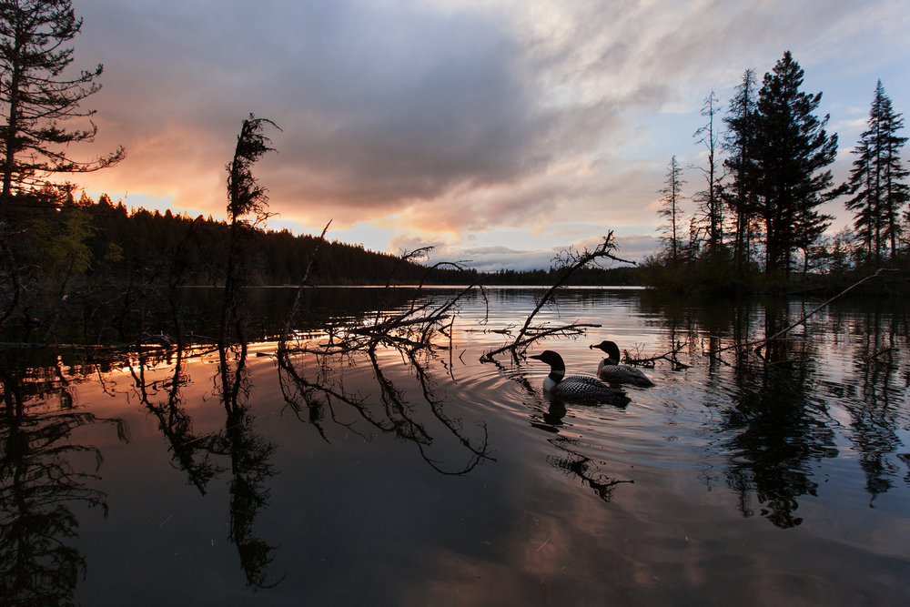 After the Biodiversity Research Institute completes their long-term study, it is hoped that many lakes in Wyoming will have scenes such as this one in British Columbia, for many generations to come.   Image ©Connor Stefanison