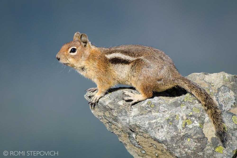 RomiSquirrel.jpg