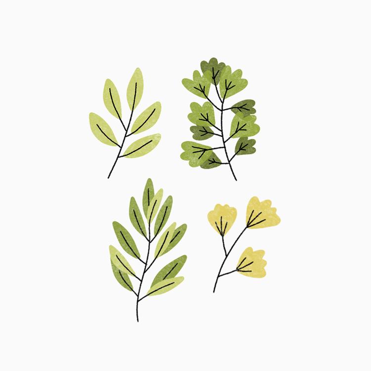 Minna_Plants.png