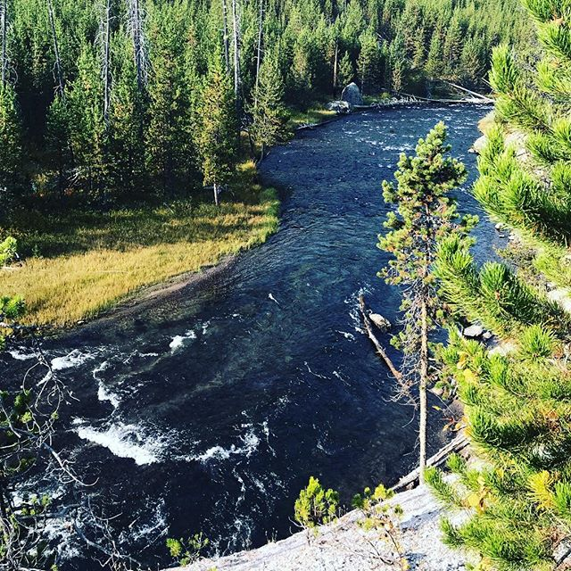 A spur of the moment decision on Saturday afternoon led our family to go on an overnight camping trip to Yellowstone National Park. 🏕If you've never been here you really need to put this on your adventure list ASAP! 🏕I have lots of photos to share with you this week! Here is the Gibbon River as it weaves through the park. 🏕The morning light was so beautiful and warmed us up after a chilly night (32*). 🏕Have you been to Yellowstone? 🏕Although a quick 26 hour trip it was so nice to explore this wonderful area! Already looking forward to our next trip here. P.s. if you need a personal Yellowstone guide, let me know! . . #yellowstonenationalpark #yellowstone #gibbonriver #nationalpark #geyser #oldfaithful #explore #familyadventure #outdoorfamily #hiking #camping #campingwithbaby