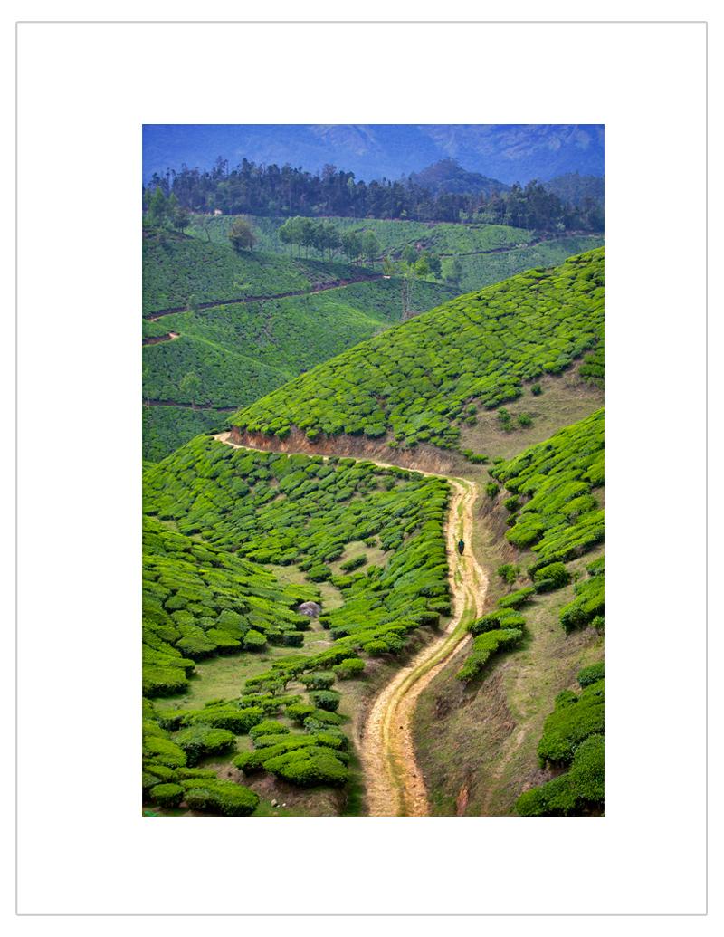 """""""Alone in tea fields"""""""