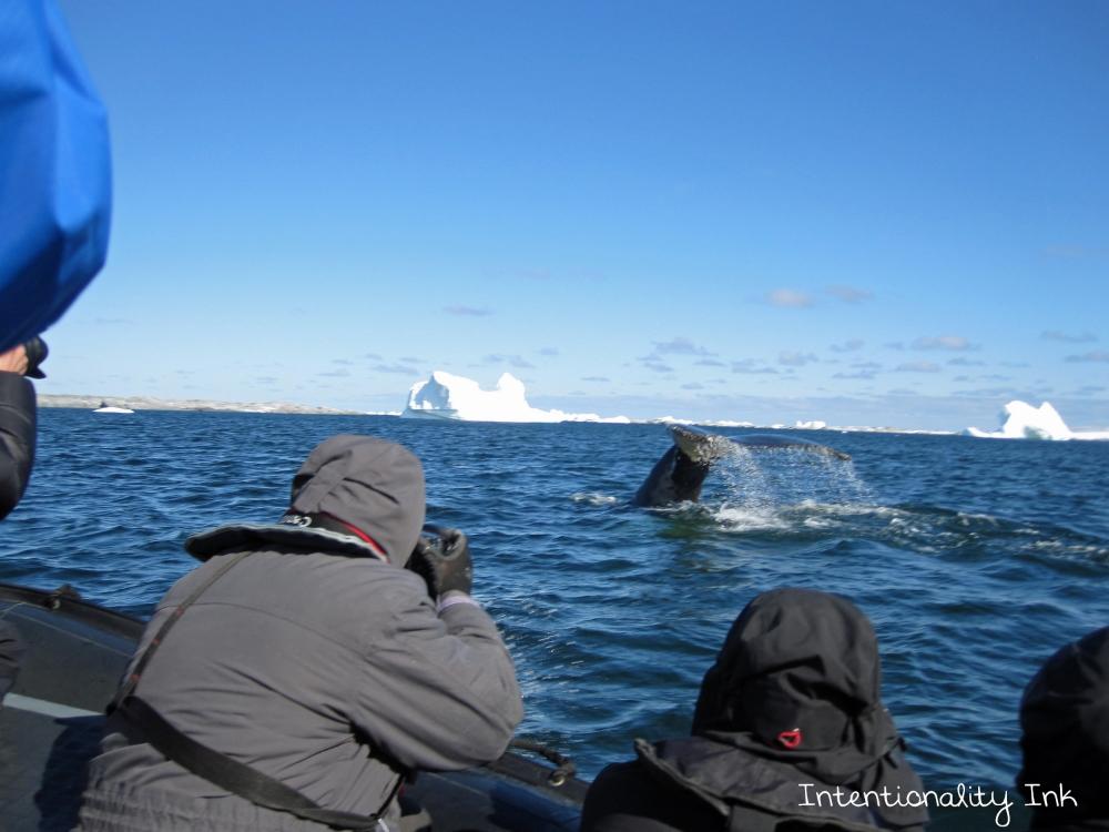 Antarctica whale Photography