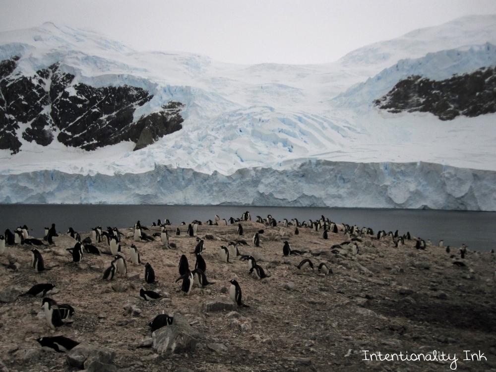 Antarctica Penguin Colony