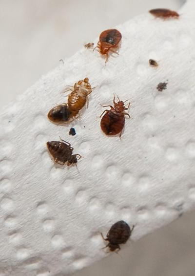 Bed Bugs Reported In Some Of Nyc S Swankiest Hotels Nyc Bed Bug