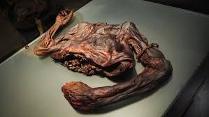 The severed torso of Old Croghan Man.