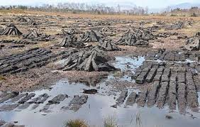 Typical peat bog where Old Croghan Man was found.