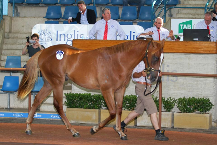 DAY 1 CLASSIC LEADER Snitzel colt purchased by Laurel Oak